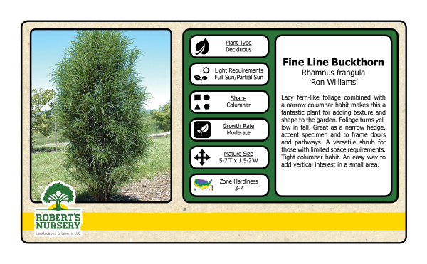 Buckthorn - Fineline