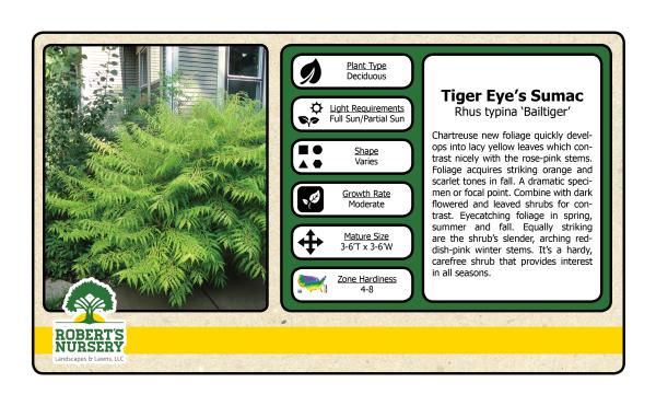 Sumac - Tiger Eyes