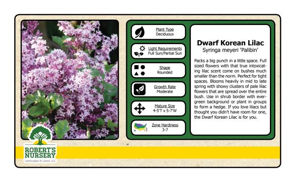 Lilac - Dwarf Korean
