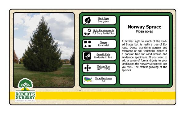 Spruce - Norway