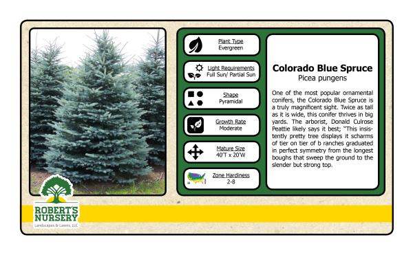 Spruce - Colorado Blue