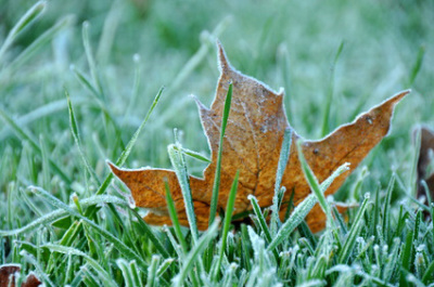 Winterizing your Lawn! 3 Easy and Helpful Tips.