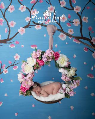 Charlotte newborn baby photographer