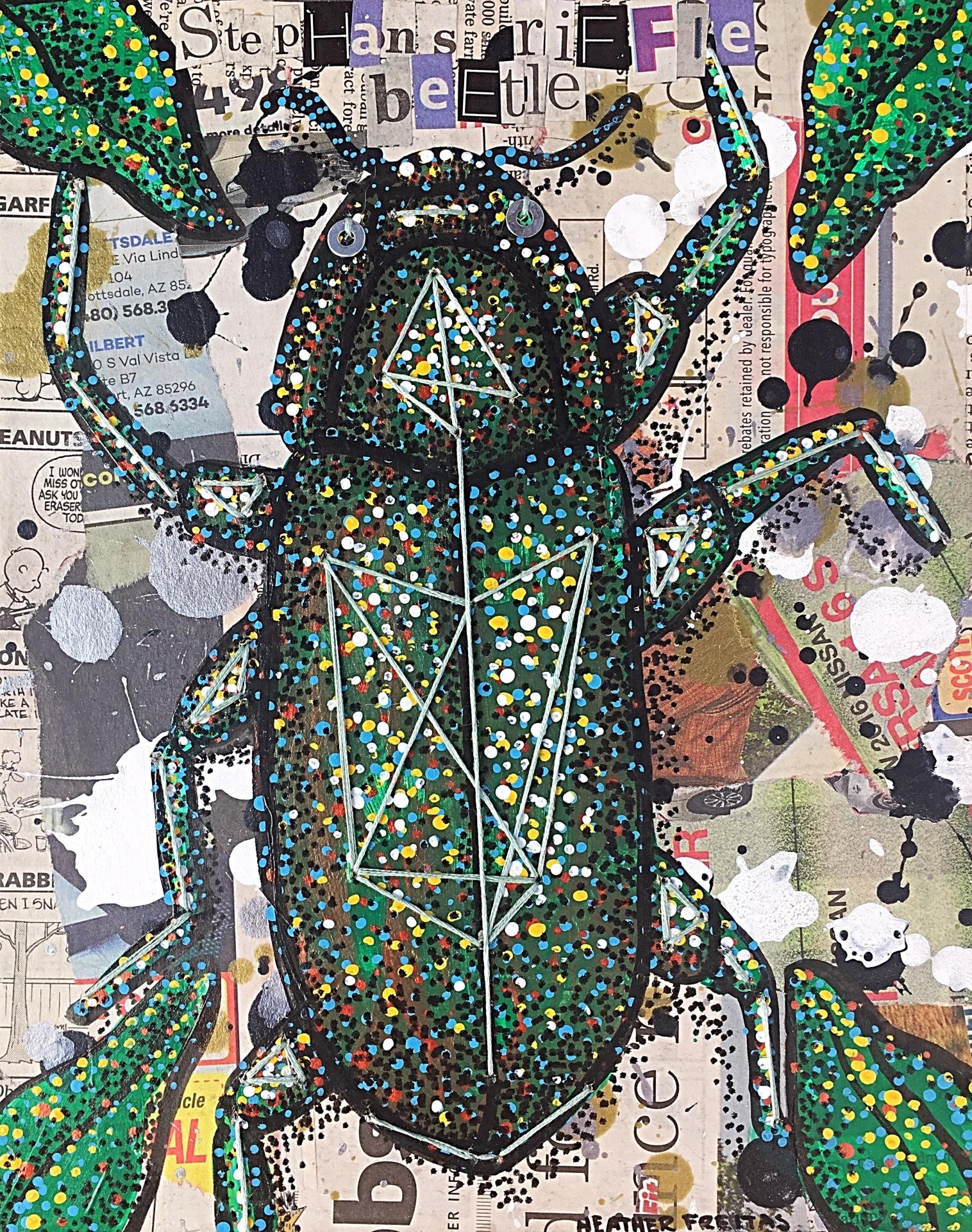 Stephans Riffle Beetle