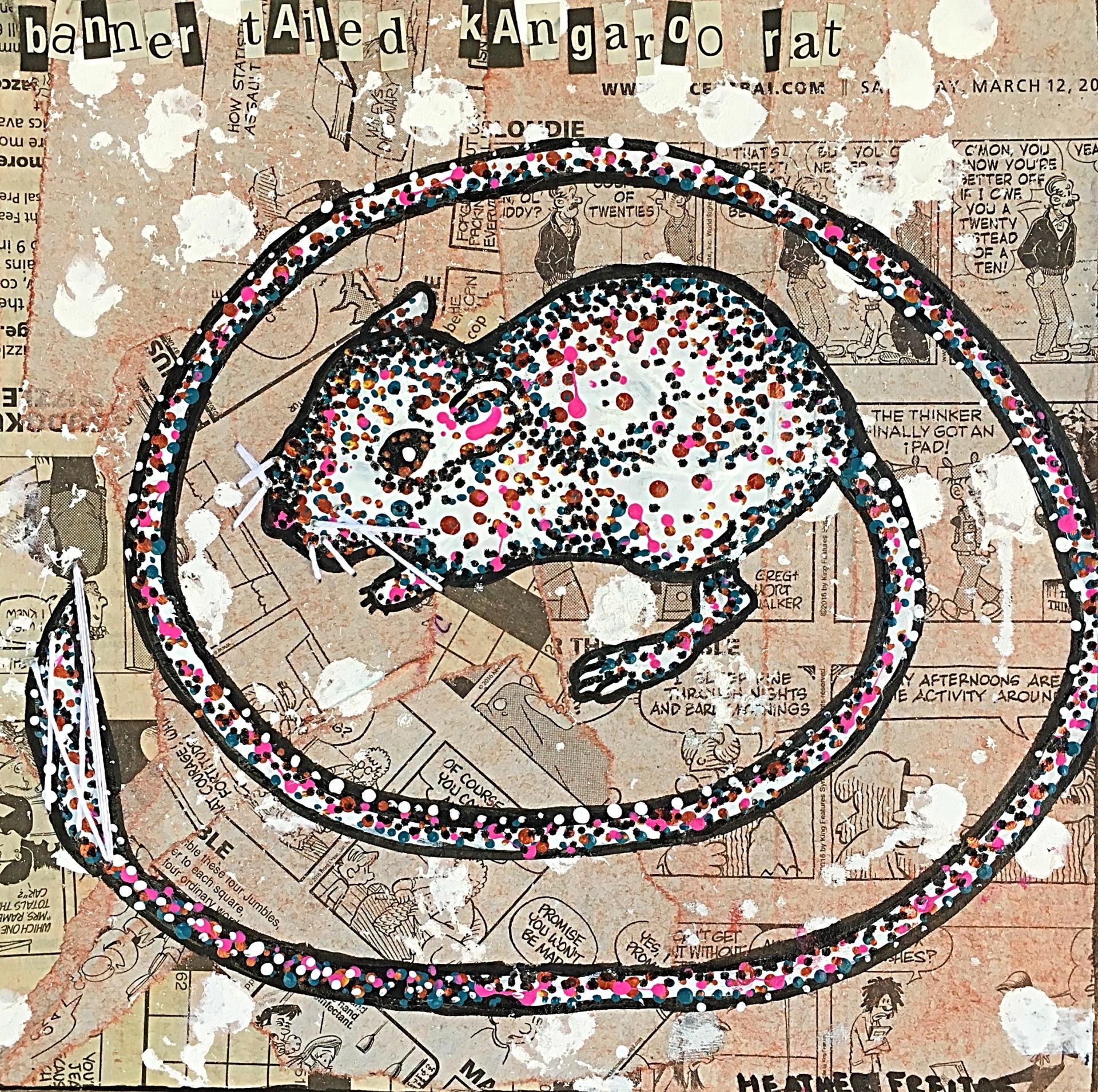 Banner Tailed Kangaroo Rat