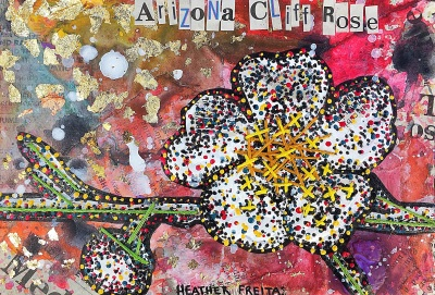 Arizona Cliff Rose