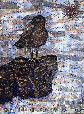 Canary Island Oystercatcher