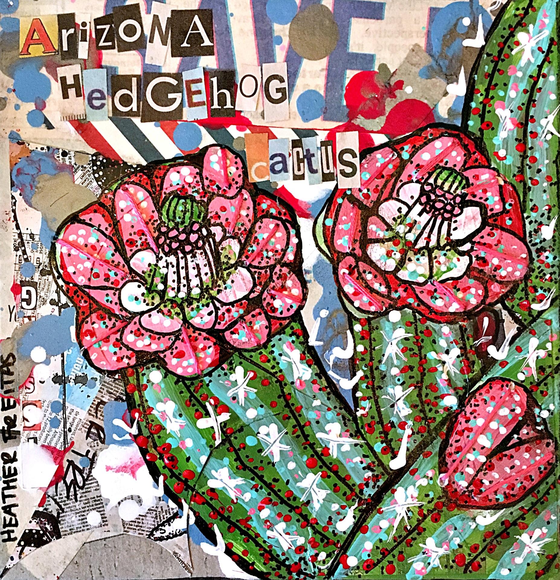 Arizona Hedgehog Cactus II