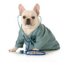 Veterinary Partners