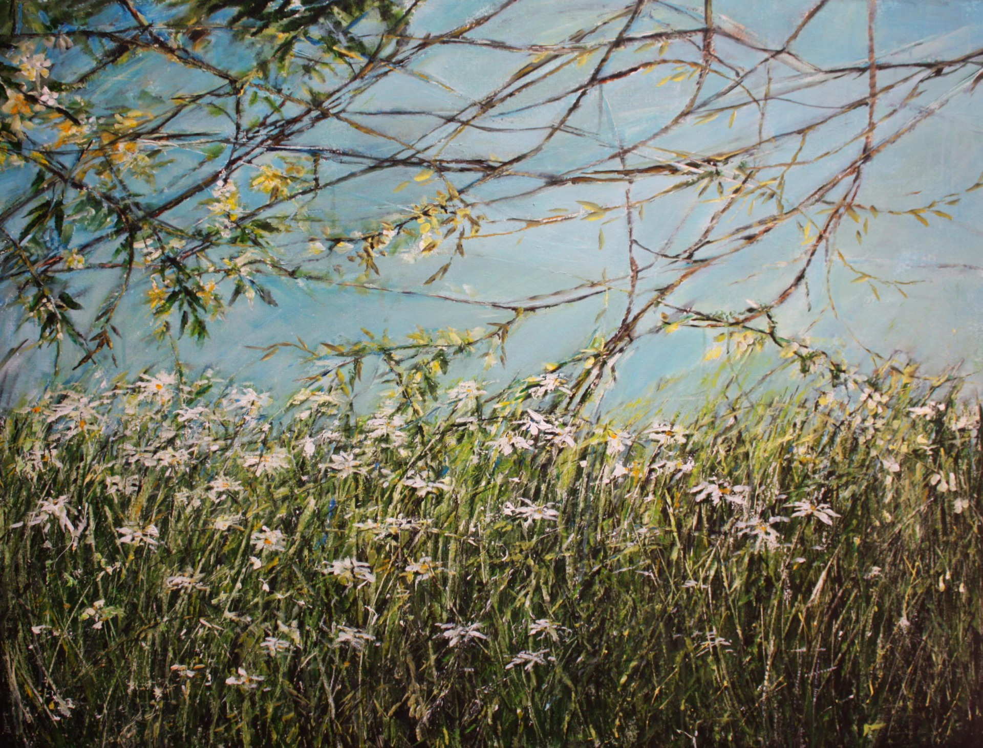 Daisies under blue sky