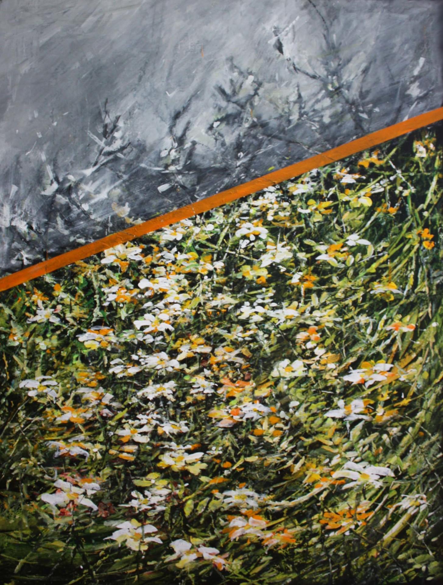 Daisies with orange line