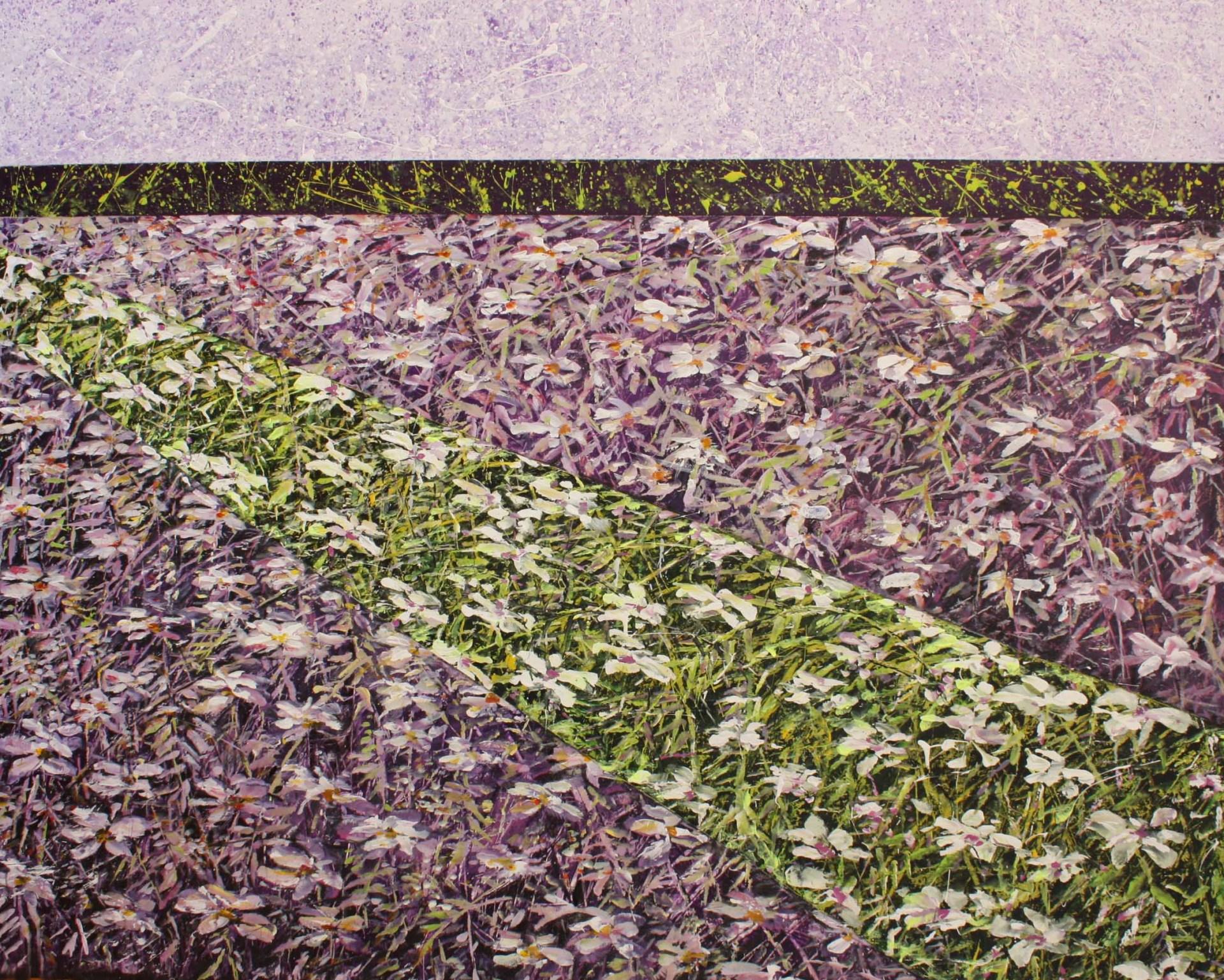 Daisies in purple field