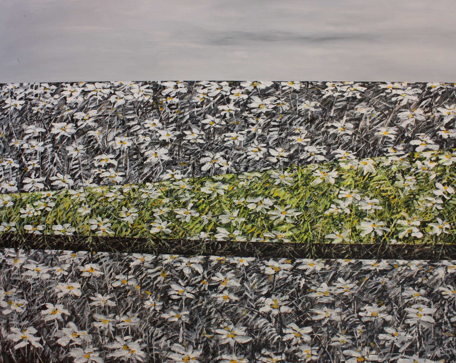 Daisies under gray sky