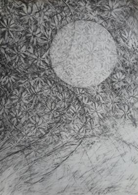 Daisies with circle