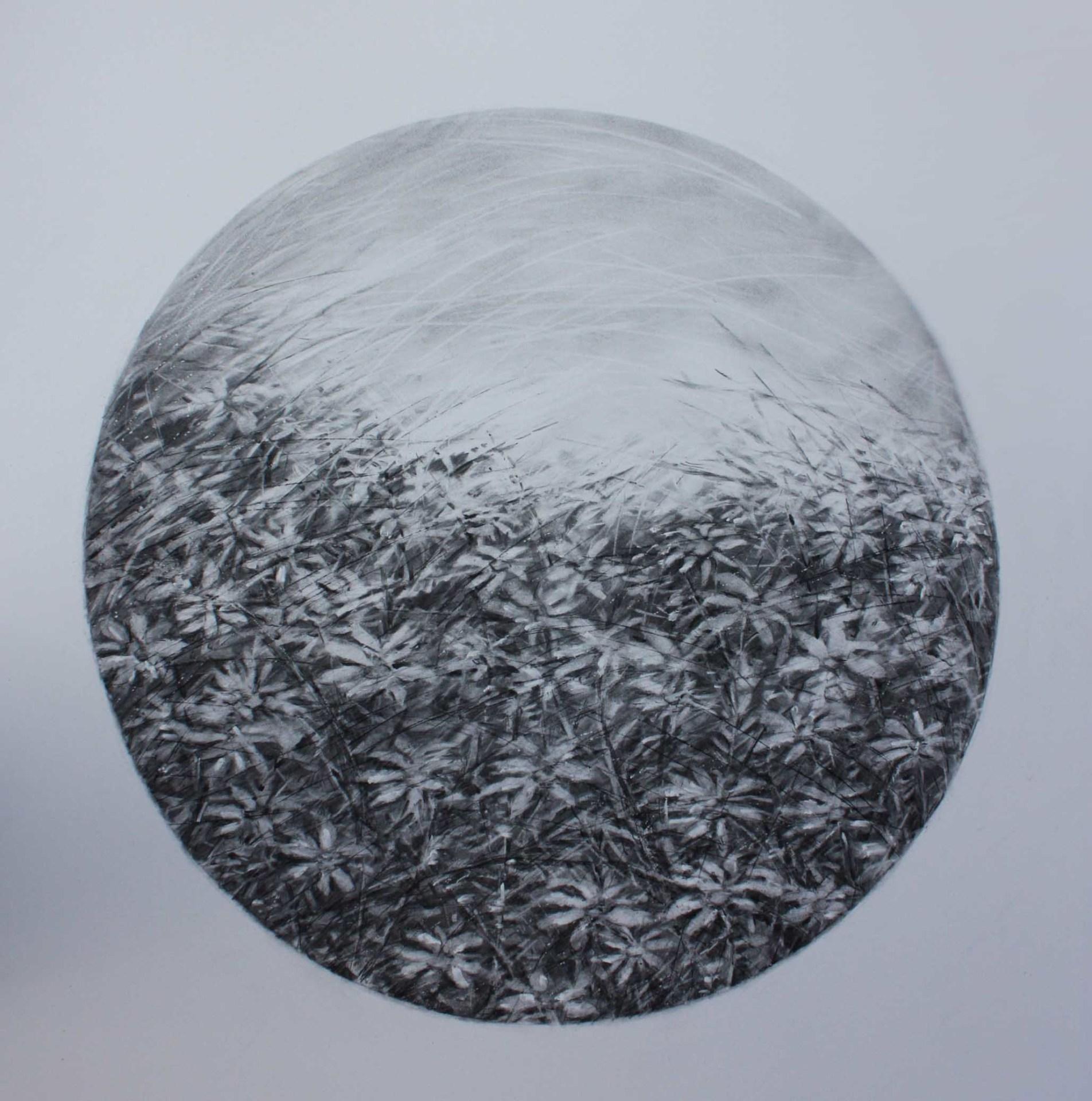 Daisies in circle