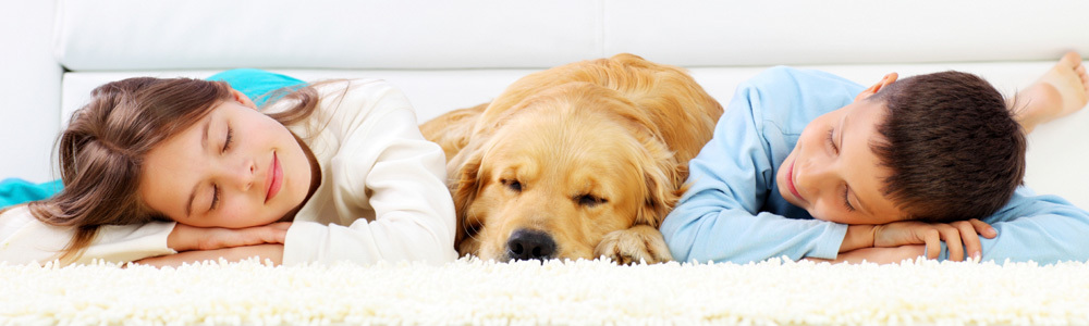 Image of a boy, dog and girl resting on clean carpet