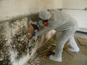 Image of mold growth on drywall with a certified technician starting the remediation process