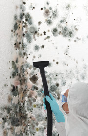 Image of mold spores on a wall being HEPA vacuumed by a certified technician