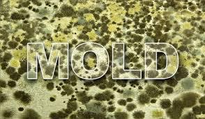 Image of mold spores with text spelling out the word mold in bold letters