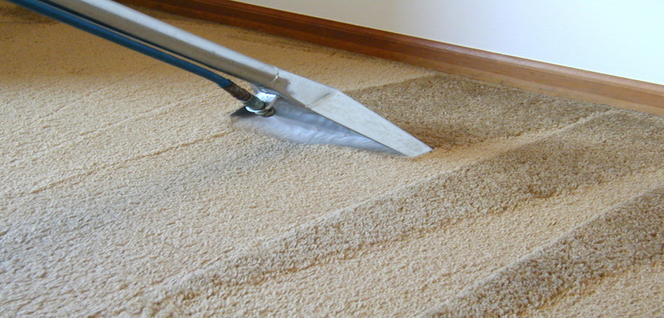 Image of a steam carpet wand while cleaning the carpet
