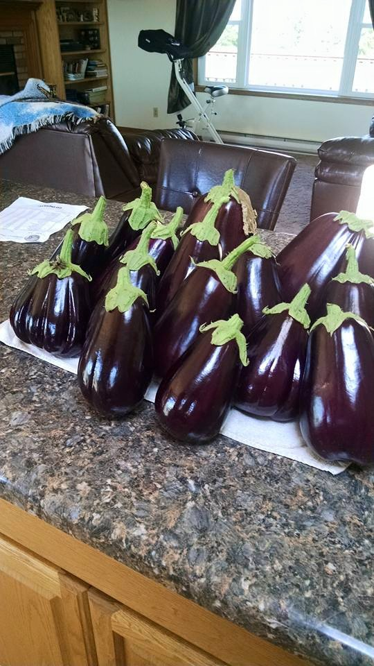 Eggplants for days....this is how the CSA idea started.