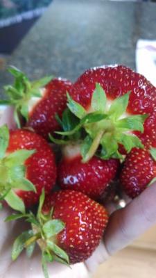 Last year's strawberries