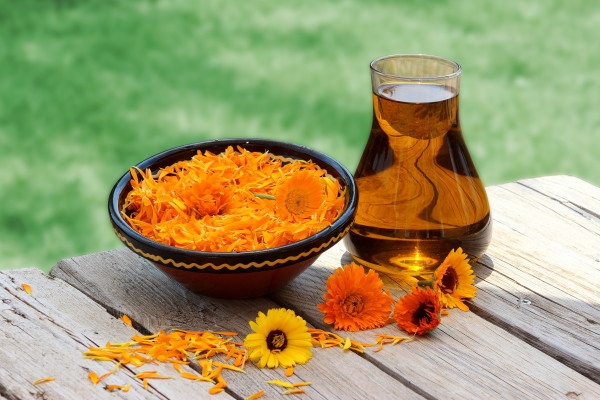 Calendula Oil 1oz, 2 oz. & 4 oz sizes
