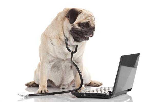 Pet Consultation Free