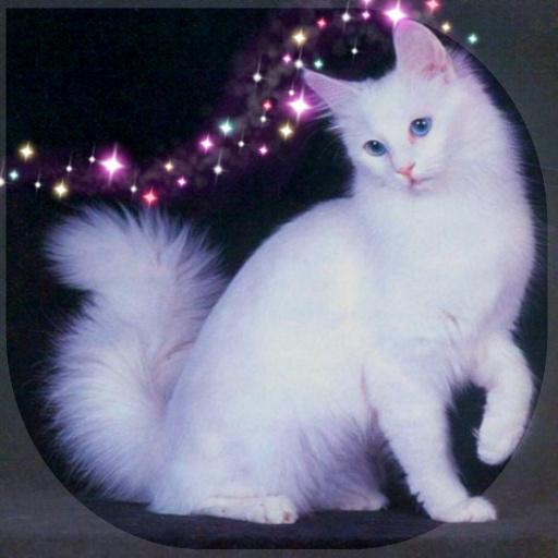 My Pet Cat