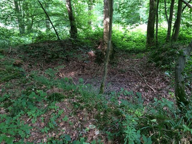 Forest floor anomalies