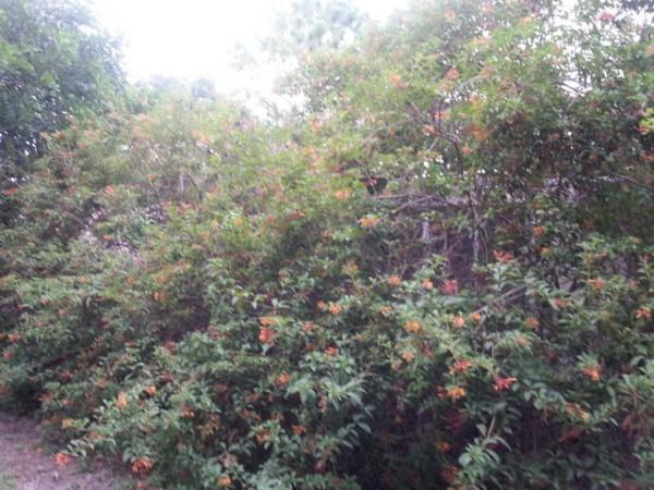 Landscape Major Trimming - Before