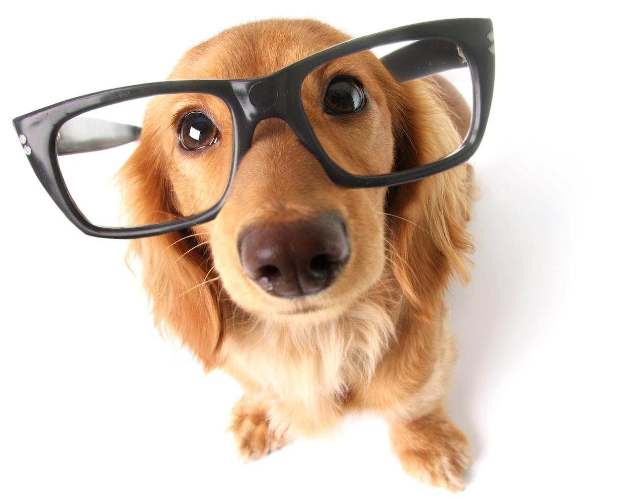 dog-oculos
