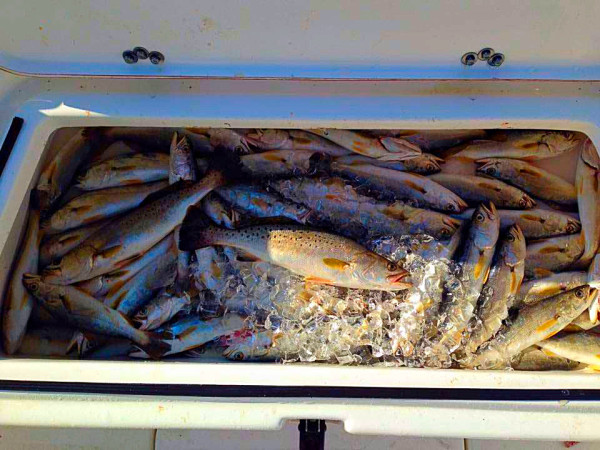 speckled trout, fishing, alex smith fishing, ms gulf coast