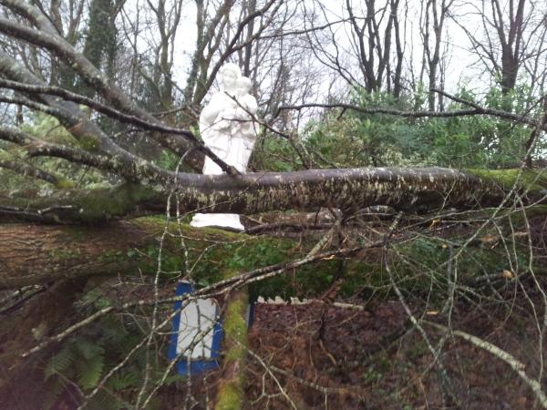 2014-01-26 Myross Wood