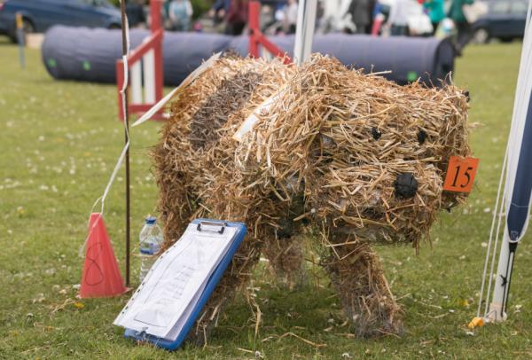 Spot The Dog - Winner of Judge's Favourite