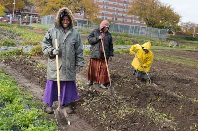 Ohio City Farm workers from The Refugee Empowerment Agricultural Program