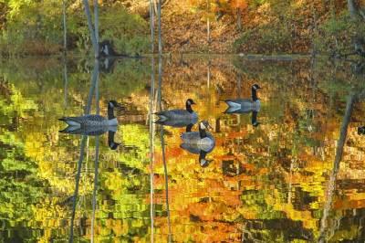 fine art photography, Autumn, Ducks