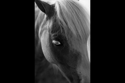 fine art photography, Horse, The Geauga Fair