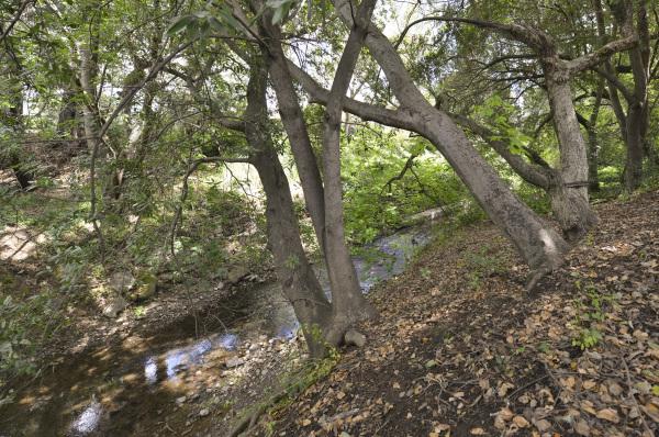 Creek at Rear of Property