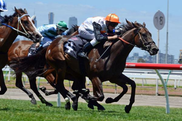 Goldslick Winning at Flemington - Bradbury's Luck x Alleged Encounter