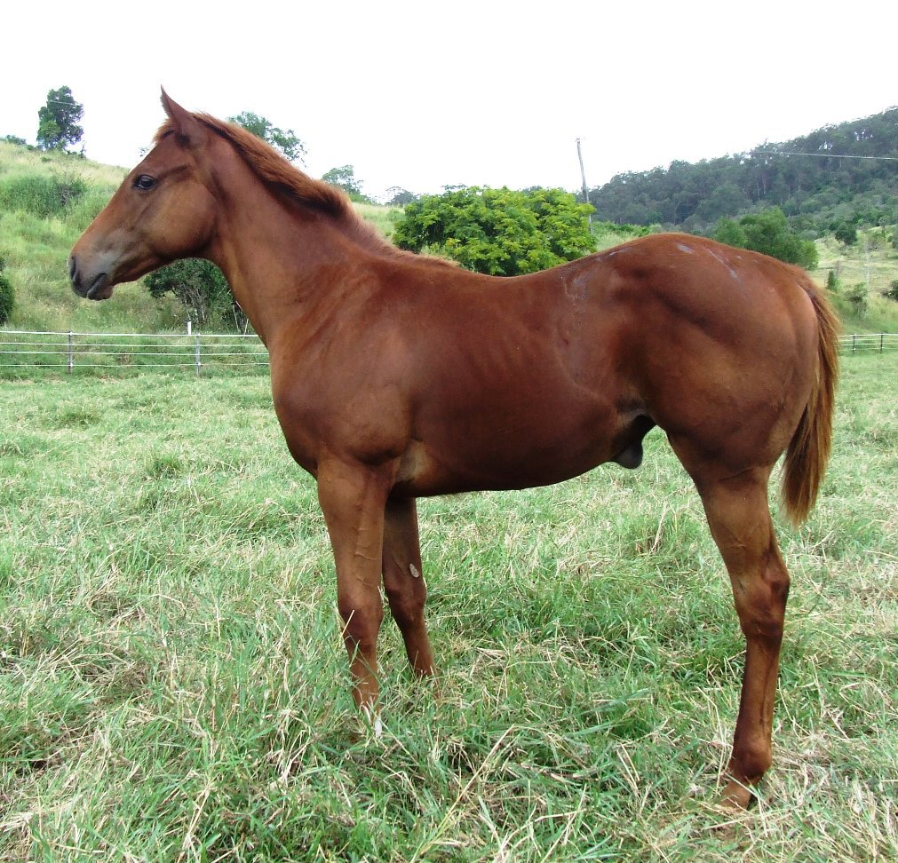 Rothesay x Miraposa Filly