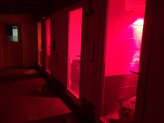 heated Kennels rooms