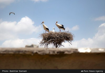 Parvar, Protected, Area, Semnan