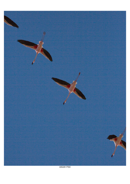 Flamingos over Walvis Bay