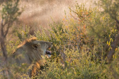 Kalahari Kondensed