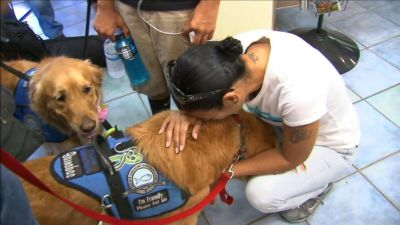 Comfort Dogs Have Flown From All Over the Country to Orlando