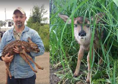 Passerby Performs Roadside C-Section to Save Fawn's Life (See the 'After' Video)