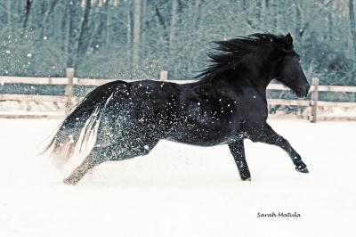 Snow Dancer