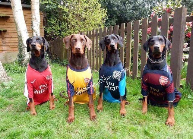 Kodi, Riggs, Rio & Indy