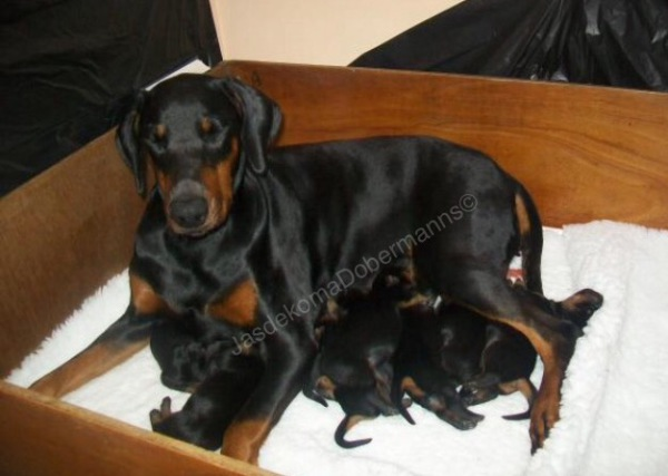 Indy and her pups